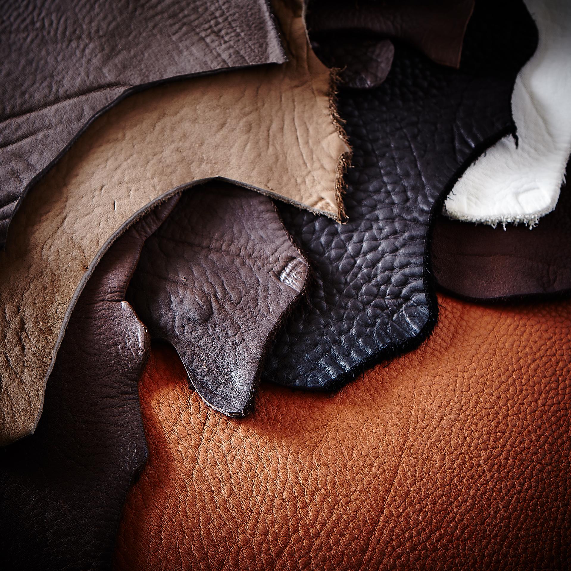 BULL種の雄牛。年間2000頭しか飼育しない希少な皮革